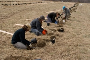 Ohio University students and volunteers from the American Chestnut Foundation get started with planting 400 chestnut seedlings. Photo by Daniel Williams